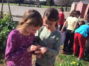 Chavez Elem Garden Program Two Students Investigate