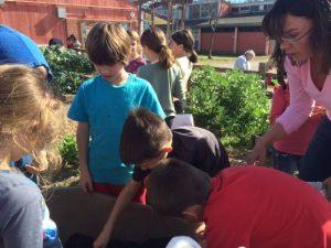 Chavez Elem Garden Program Students Dig In