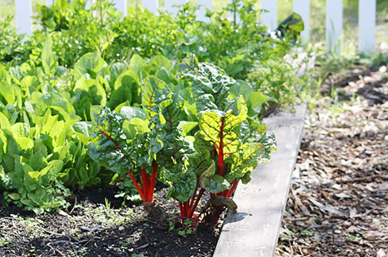 Cool Solutions Home Garden