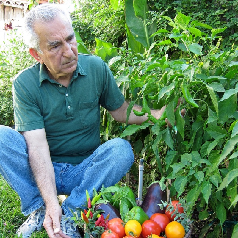 Vegetable_Basket_12x18-1