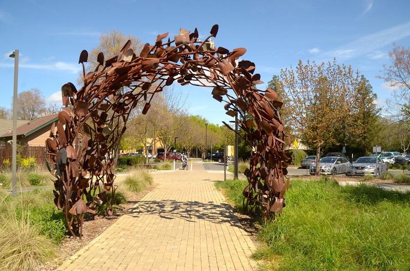 Cool Davis UC Davis Arboretum