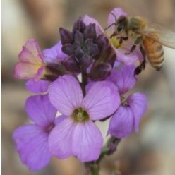 Cool Davis Coalition Circle of Bees