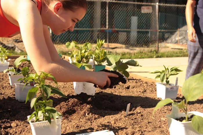 Community Gardens - Noelle planting