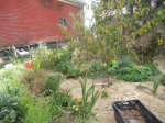 Permaculture garden with fruit tree, herbs, flowers and vegetables munched with hay