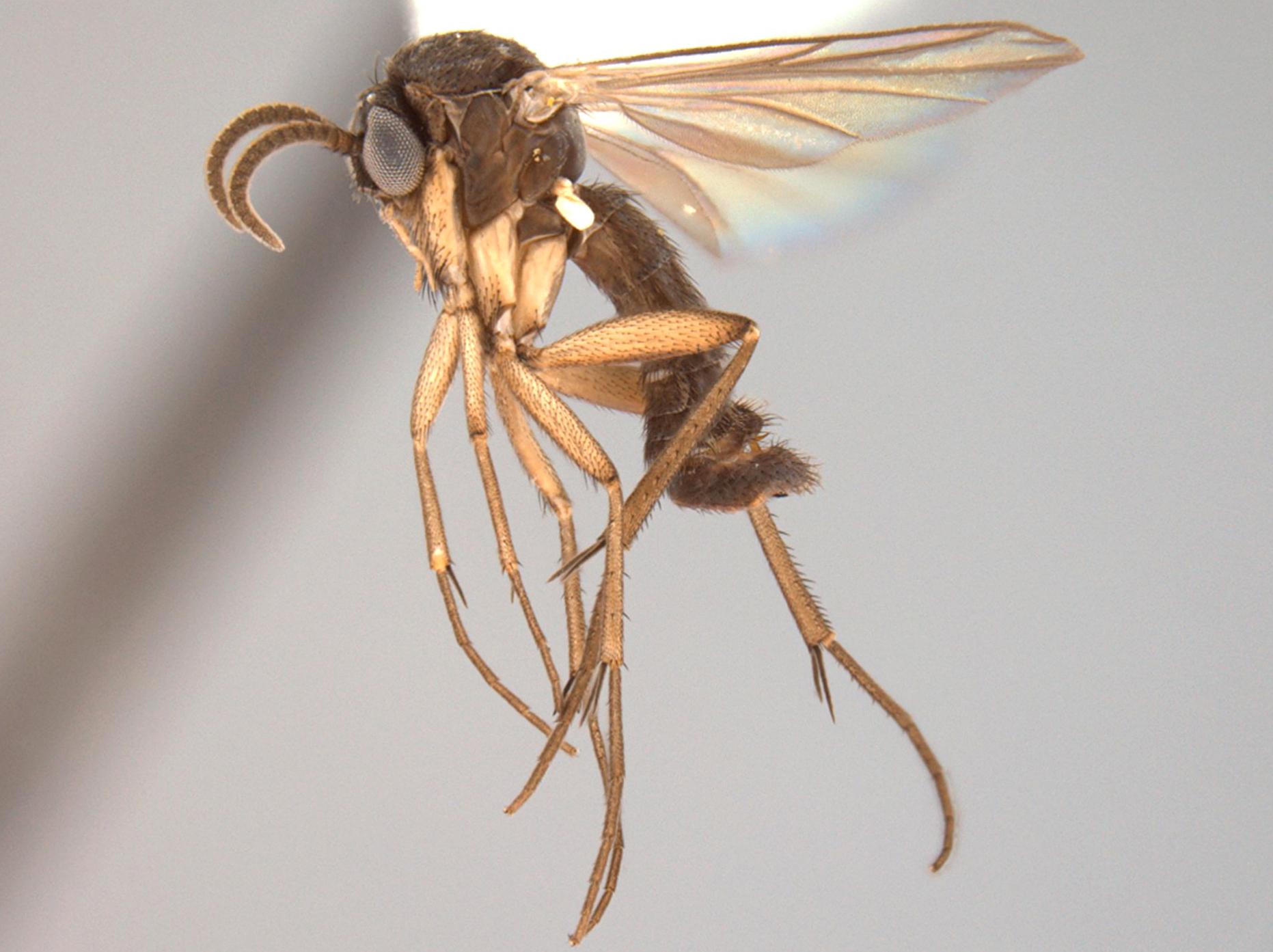 Peter Kerr named his newly discovered gnat after his climate hero, Bill McKibben.