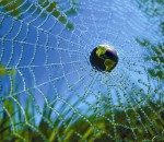 What was a turning moment in your life? When did you become aware of your part in the web of life?